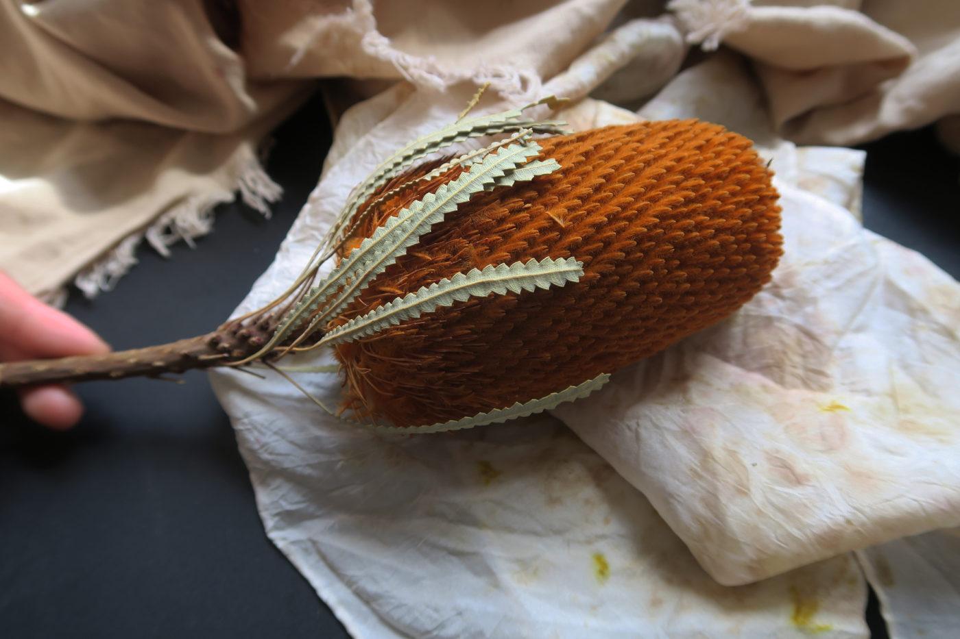 fleur exotique séchée orange
