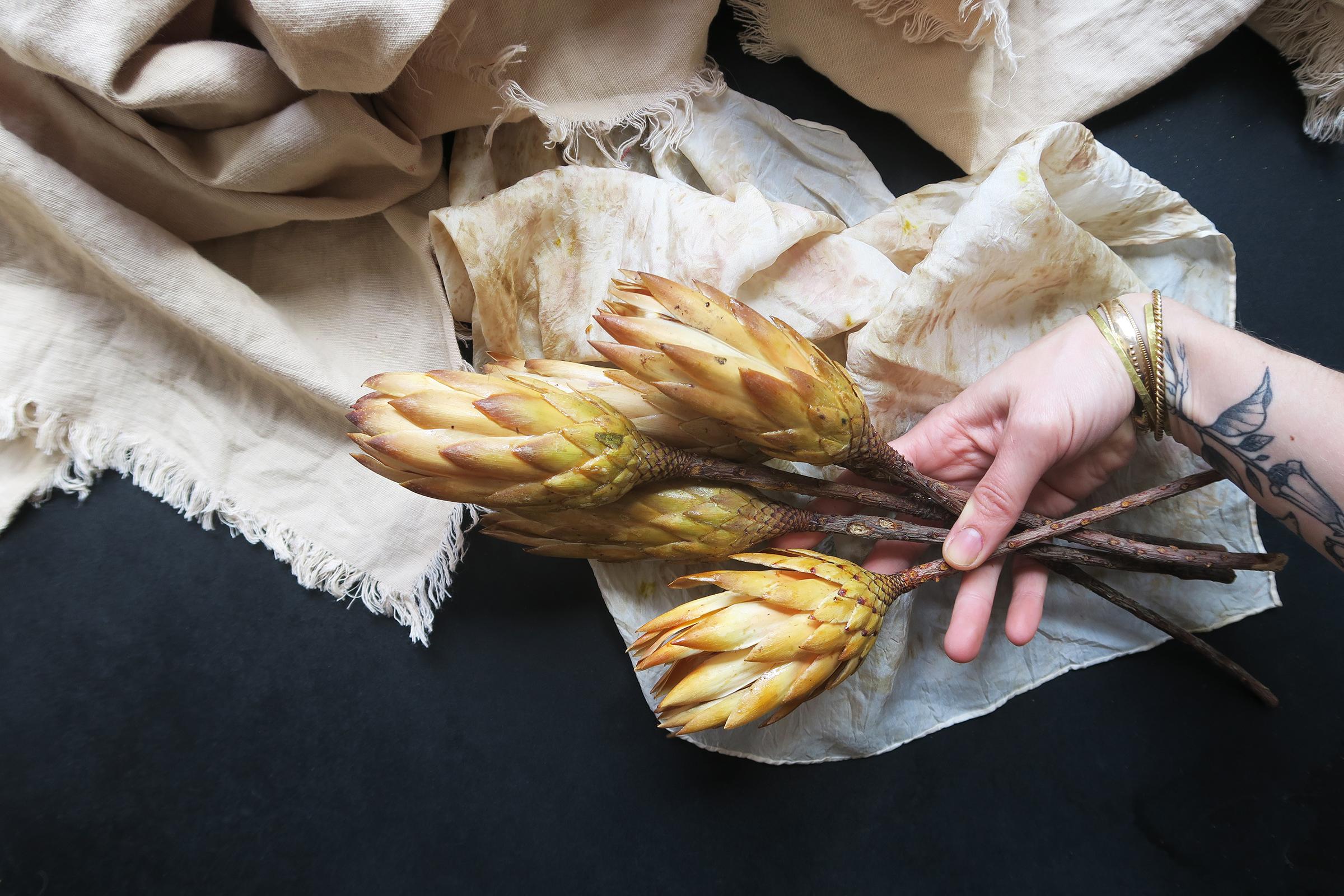 protea repens jaune