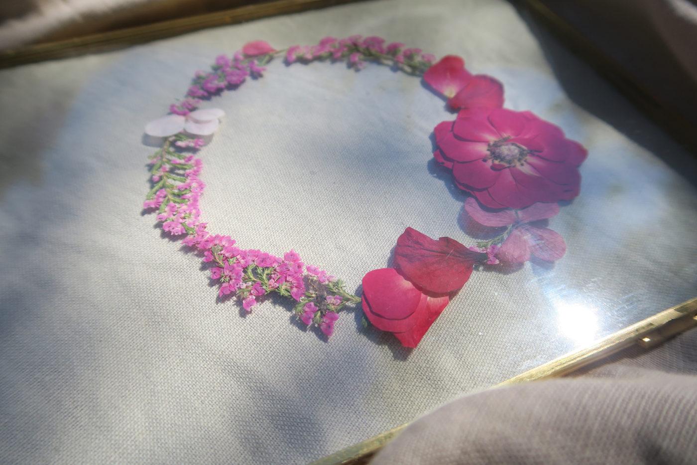 herbier rose séchée