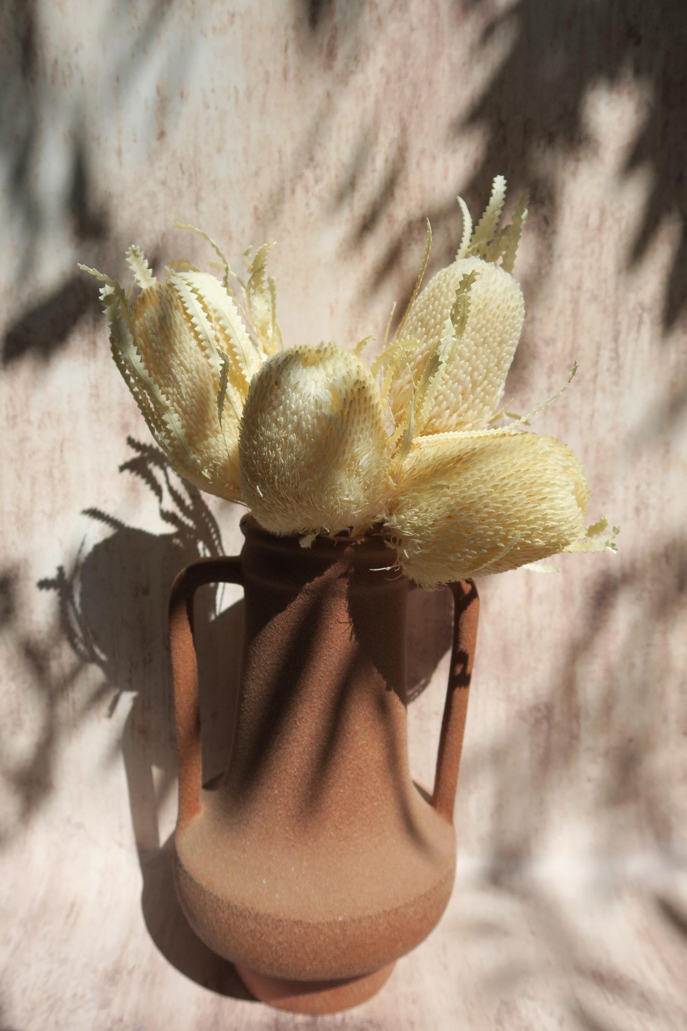 banksia fleur exotique