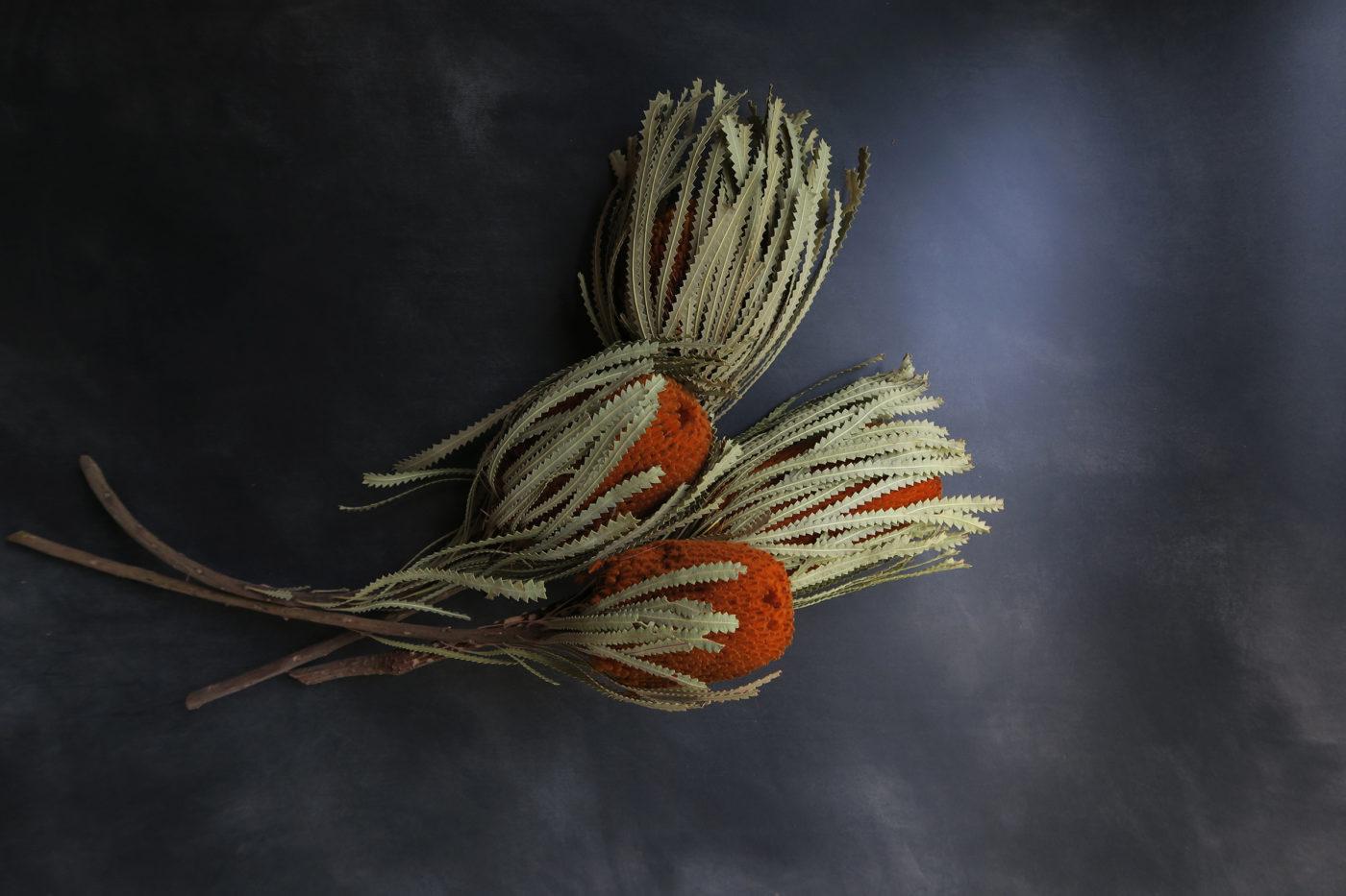 banksia fleur séchée exotique bohème orange mandarine