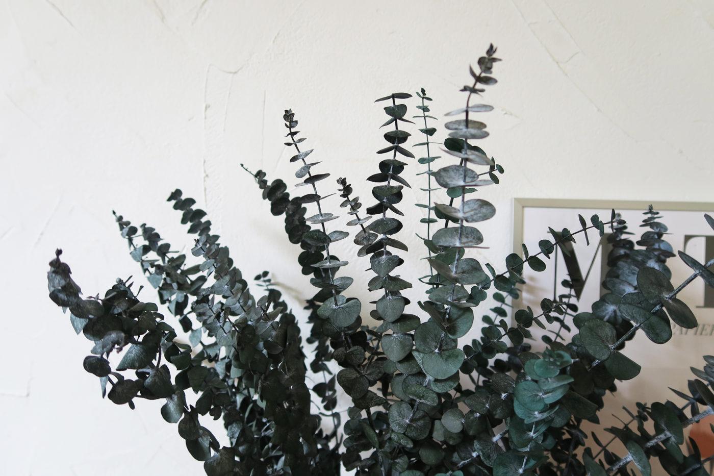 eucalyptus stabilisé preservé vert bleu baby blue
