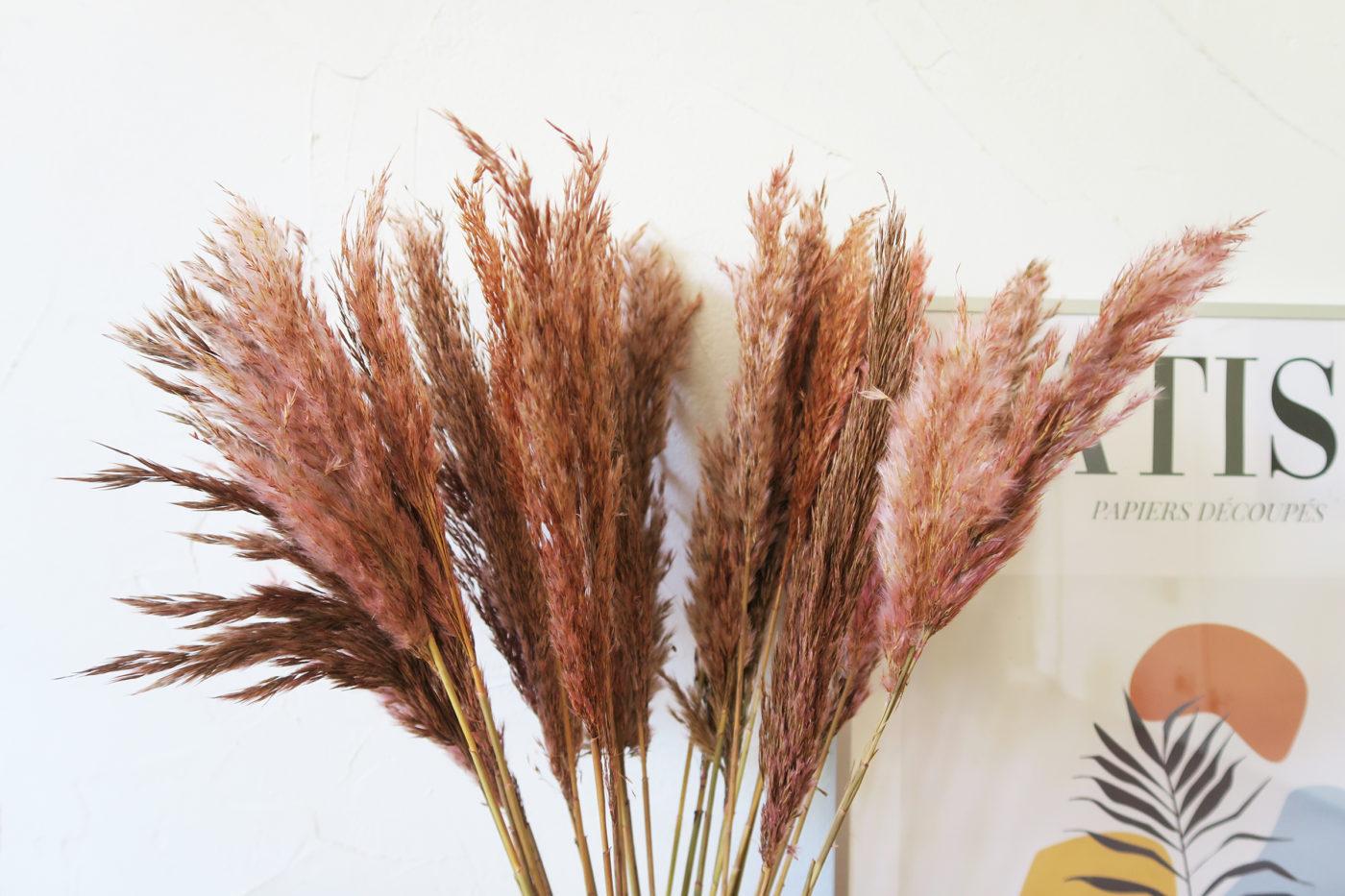 herbe de la pampa séchée rose